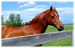 Horse properties in Newport Beach, CA