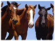 Horse properties in Orange Park Acres